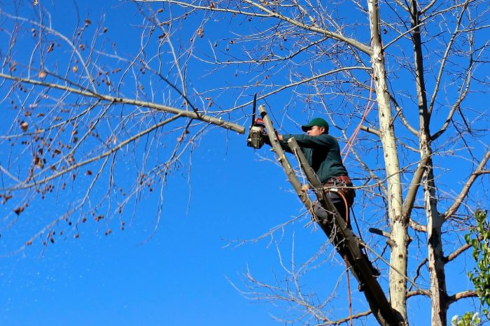 elagage etetage abattage d'arbre