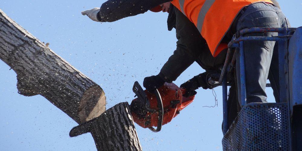Abattage d'arbre 37