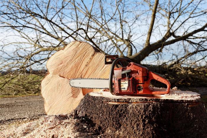 abattre arbre buxerolles 86180