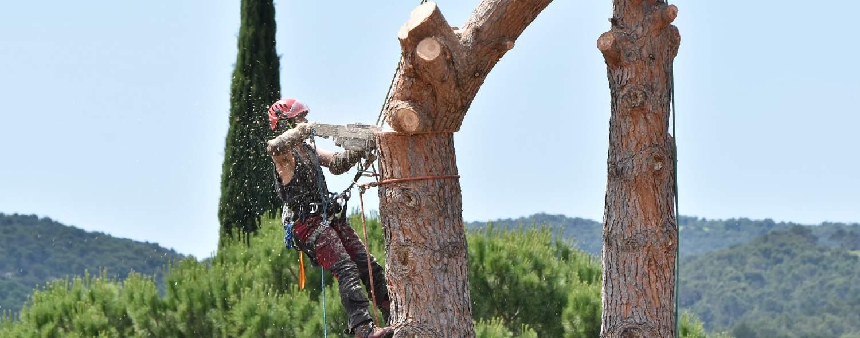 Élagage d'arbres sur Buxerolles 86180 et environs