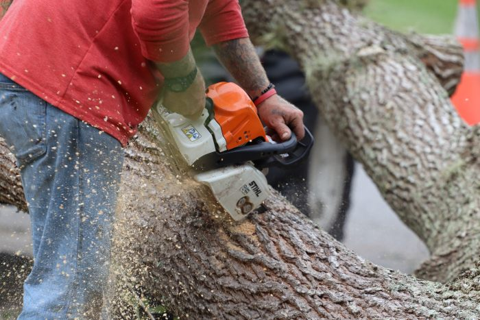 Taille arbres la baule escoublac